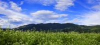 富山県 南砺そば畑